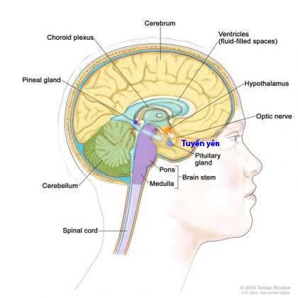 pituitary_cancer_en-420x420
