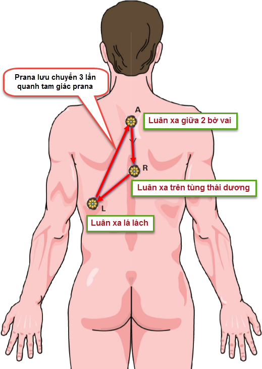 Tam giác prana và việc hấp thu prana trong tơ thể người