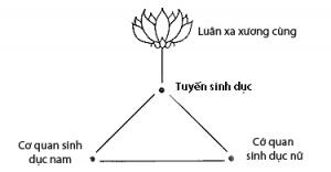 sacral center