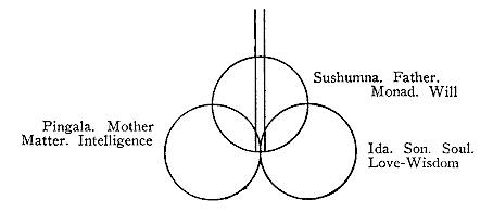 Ba vận hà trong xương sống